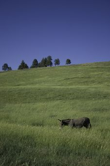 Wild Burro In State Park Stock Photography
