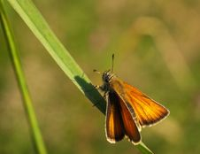 Free Butterfly On Grass Royalty Free Stock Photo - 5898155
