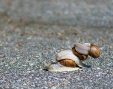 Free Three Snails Play Royalty Free Stock Photography - 5899127