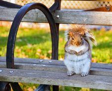 Free Well-fed Squirrel On A Bench Stock Image - 5899171