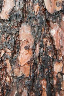 Free Tree Bark Stock Image - 5899351