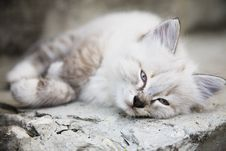 Free Kitten Stock Images - 5899604