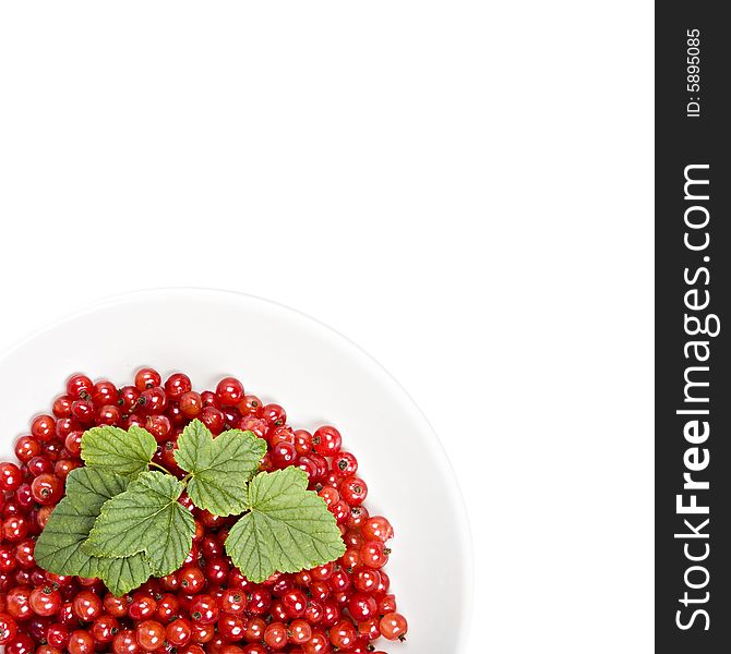 Red berries in a isolated bowl