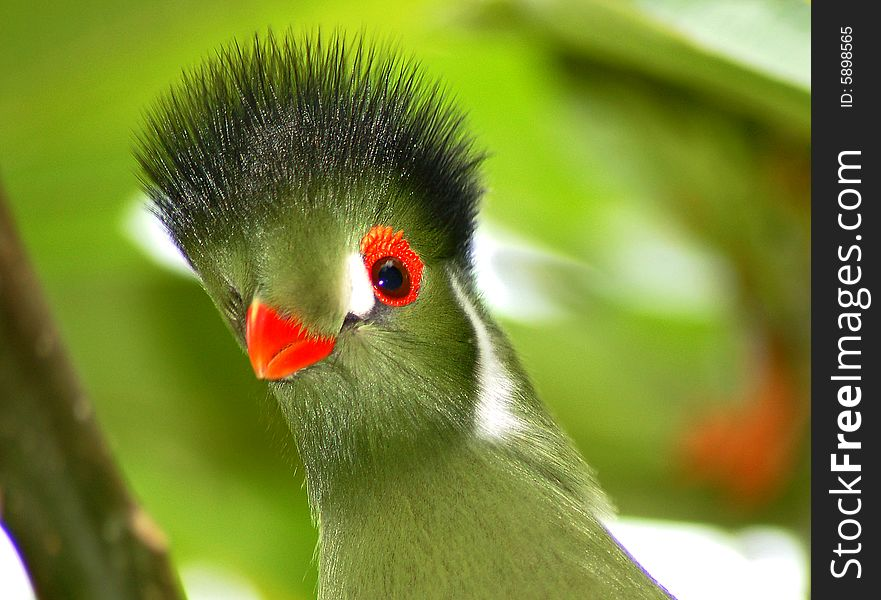 Tropical green bird