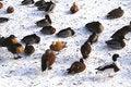 Free Ducks Stock Photography - 599532