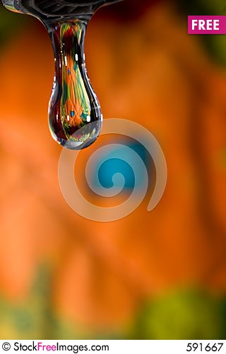 Free Spring Drop Royalty Free Stock Photography - 591667