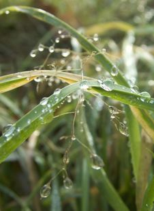Free Winter Dew Drops Royalty Free Stock Photos - 590318