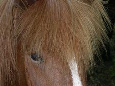 Free Horse Head Stock Image - 591321