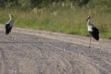 Free Stork Stock Photo - 592330