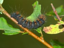 Caterpillar Of The Butterfly. Stock Image