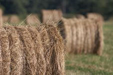 Free Harvested Rolls Of Hay Stock Image - 592711