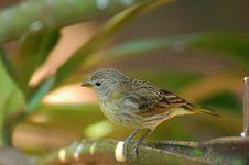 Free Bird In Green Royalty Free Stock Image - 593266