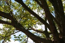 Free Branches With Leaves Seen From Above Royalty Free Stock Image - 593636