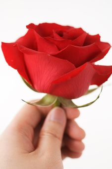 Free Red Roses For Valentine Stock Image - 594811