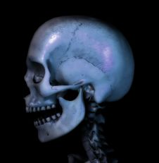 Free Skull 8 Royalty Free Stock Photo - 597465