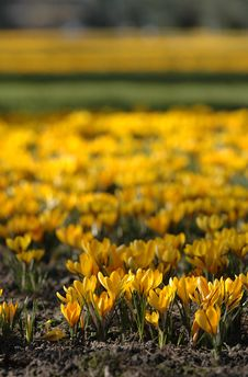 Free Field With Flowers Stock Photos - 598303