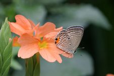 Butterfly & Flower Royalty Free Stock Photos