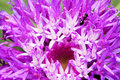 Free Purple Flower And Black Ant Royalty Free Stock Photo - 5900335