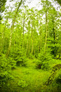 Free Forest Stock Photography - 5906522