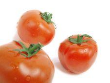 Free Tomato Group Stock Photos - 5900743