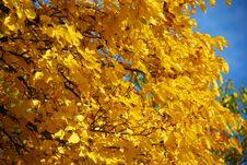 Free Autumn Tree Stock Photos - 5900923