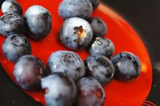Free Blueberries Royalty Free Stock Images - 5901229