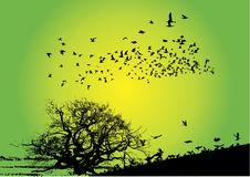 Free Birds With Tree Stock Image - 5901411