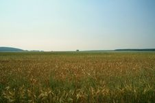 Free Summer Landscape Stock Photos - 5901773
