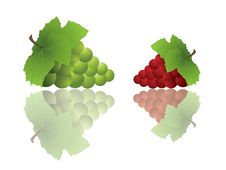 Free Grapes With Reflections Stock Photo - 5902090