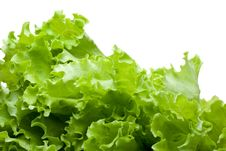 Free Leaves Of Lettuce Royalty Free Stock Image - 5902236