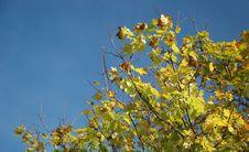Free Autumn Tints Background Stock Photography - 5902552