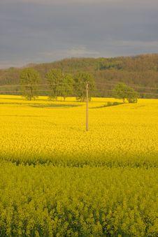 Free Landscape Stock Photo - 5902800