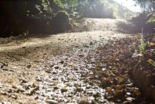 Free Forrest Pathway On A Calm Morning Royalty Free Stock Image - 5903696