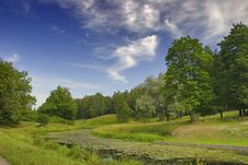 Free Landscape With Overgrown Pond Stock Images - 5904014