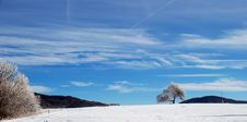 Lonely Tree In Winter Stock Photo
