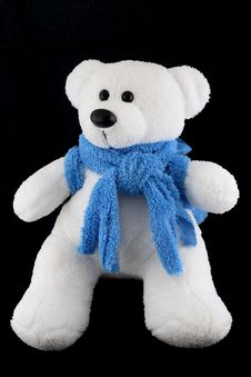 Free Polar Bear On Black Background Stock Photo - 5905300