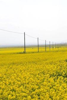 Free Flower Land Stock Photo - 5905510