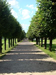 Lime Avenue Royalty Free Stock Image