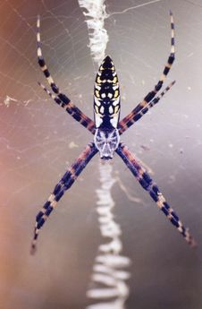 Free Spider Royalty Free Stock Photo - 5906515