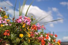 Free Flowers In Summer Stock Photos - 5906733