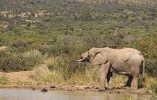 Free Singe Elephant Water Stock Photos - 5907873