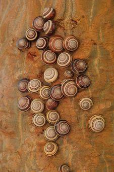 Free Bradybaena Snails, Indonesia Royalty Free Stock Images - 5909489