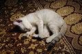 Free Sleeping Kitten Royalty Free Stock Image - 5918406