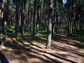 Free Forests  Road Stock Photos - 5918413