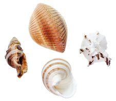 Free Seashells Royalty Free Stock Photos - 5910358