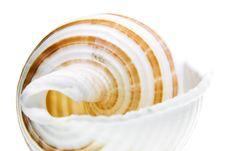 Free Seashell Royalty Free Stock Photography - 5910497