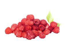 Free Raspberries Stock Photos - 5910713