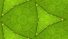 Free Underside Of Green Leaf Seamless Tile Background Royalty Free Stock Image - 5911396