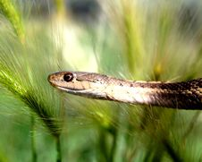Free Snake In The Grass Stock Images - 5912404