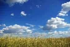 Free Wheats Royalty Free Stock Photos - 5912838